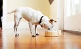 Три интересни факти за храненето на кучетата
