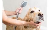 Колко често трябва да къпим кучето си?