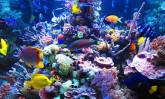 Какво трябва да знаете при избора на аквариум? – 2 част