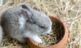 Какво трябва да знаете за храненето на декоративните зайчета?