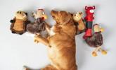 Кои са любимите аксесоари на кучетата?